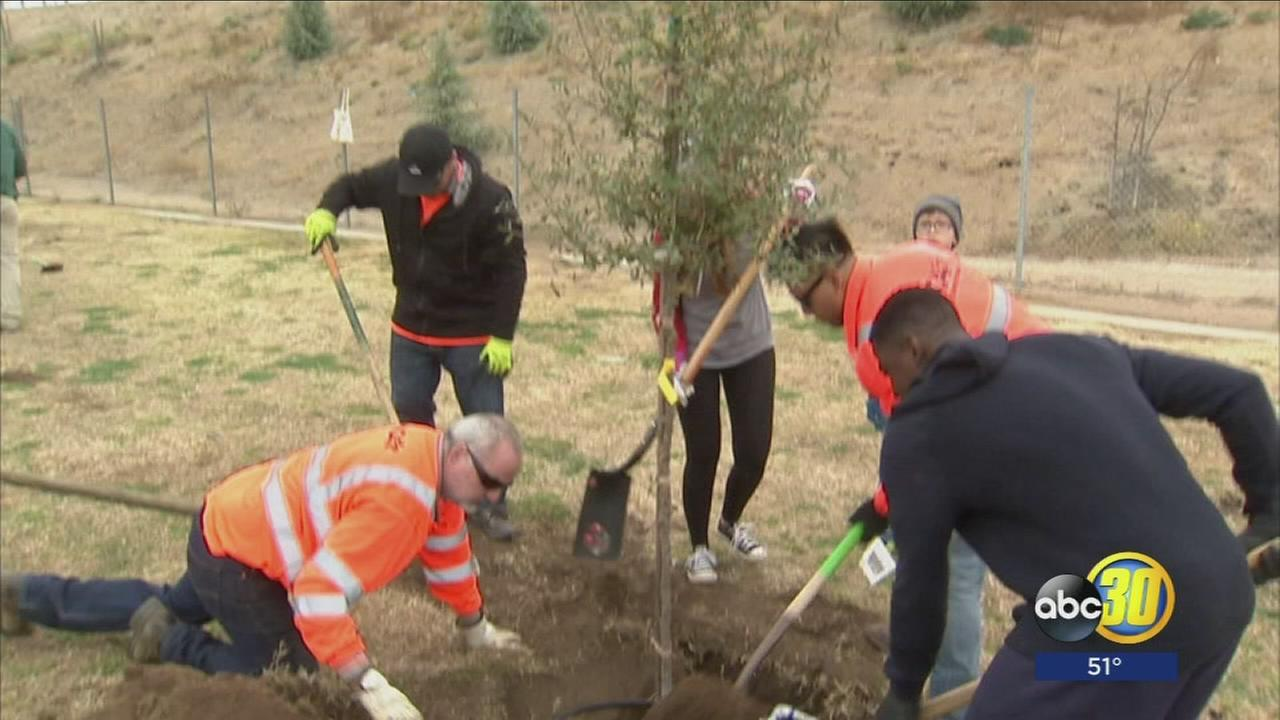 Non-profit plants trees to tackle pollution in Central Valley