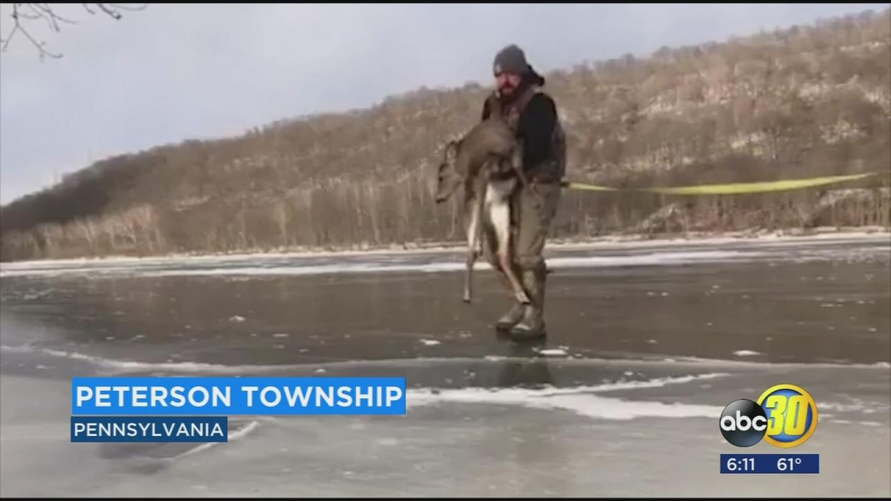 Father and son rescue deer stuck on frozen pond