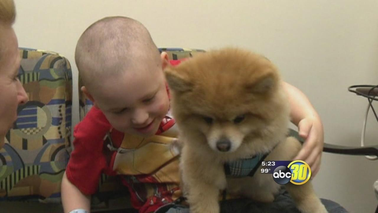 Pets help cancer patients