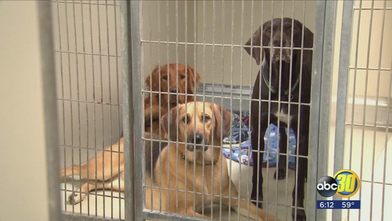 First case of Canine Influenza reported in Fresno County
