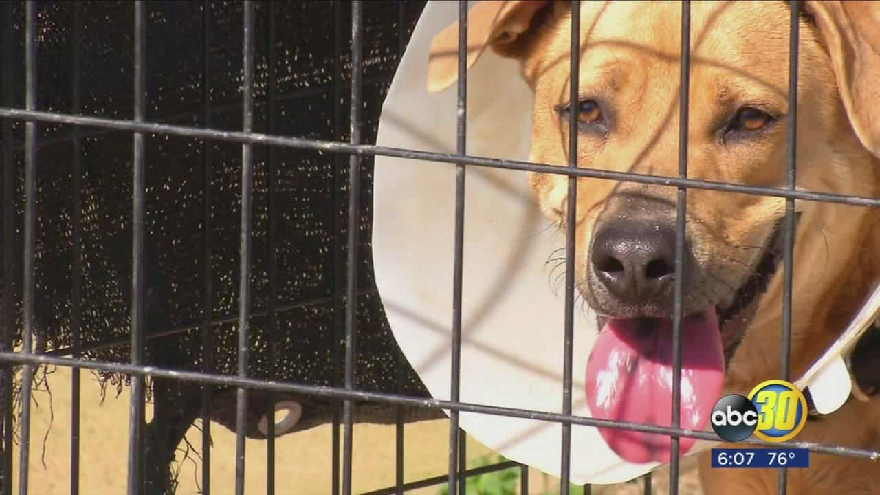Parvo outbreak forces Lemoore shelter to temporarily close to public