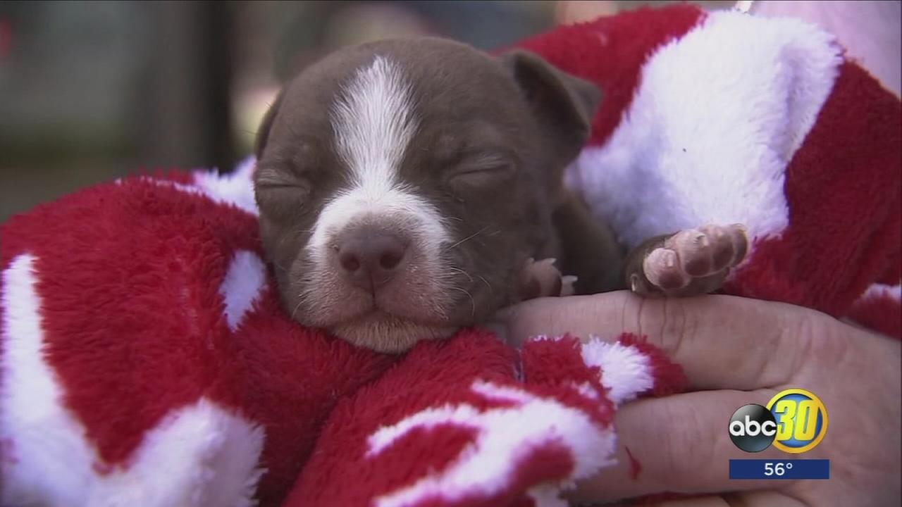 Dogs, puppies in crisis after abandonment in Central Valley