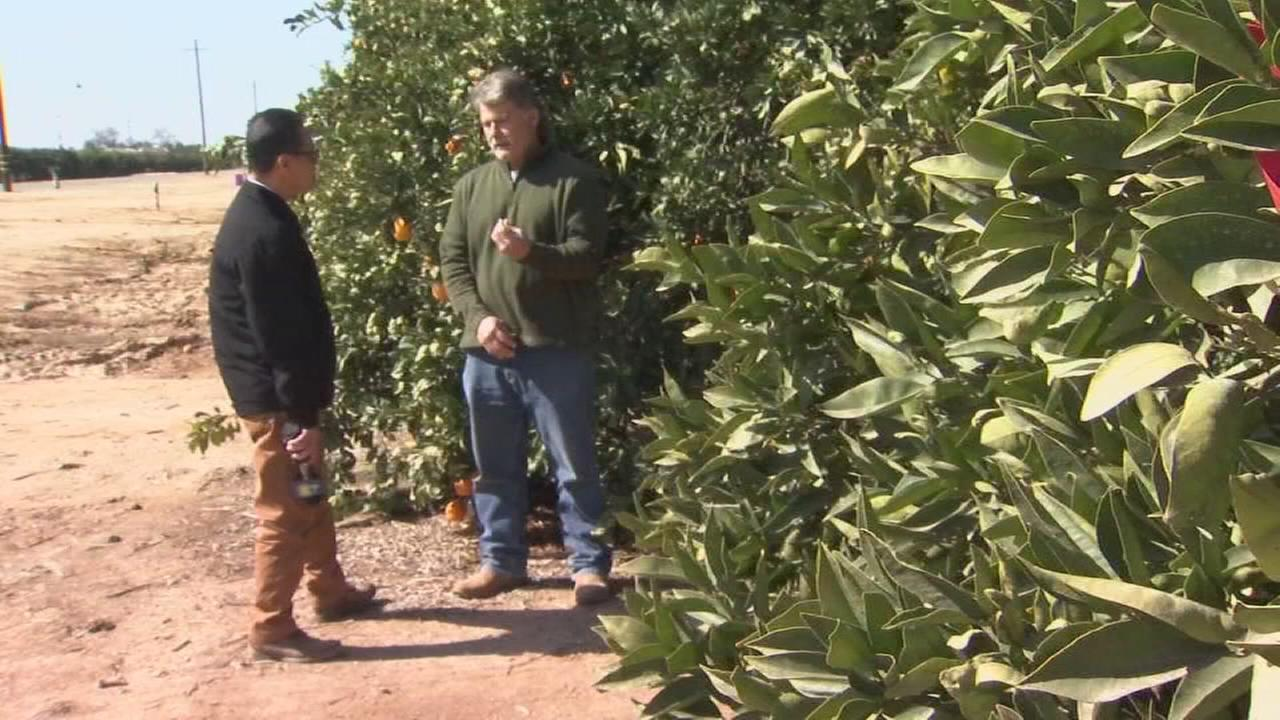 Farmers protect plants during freeze