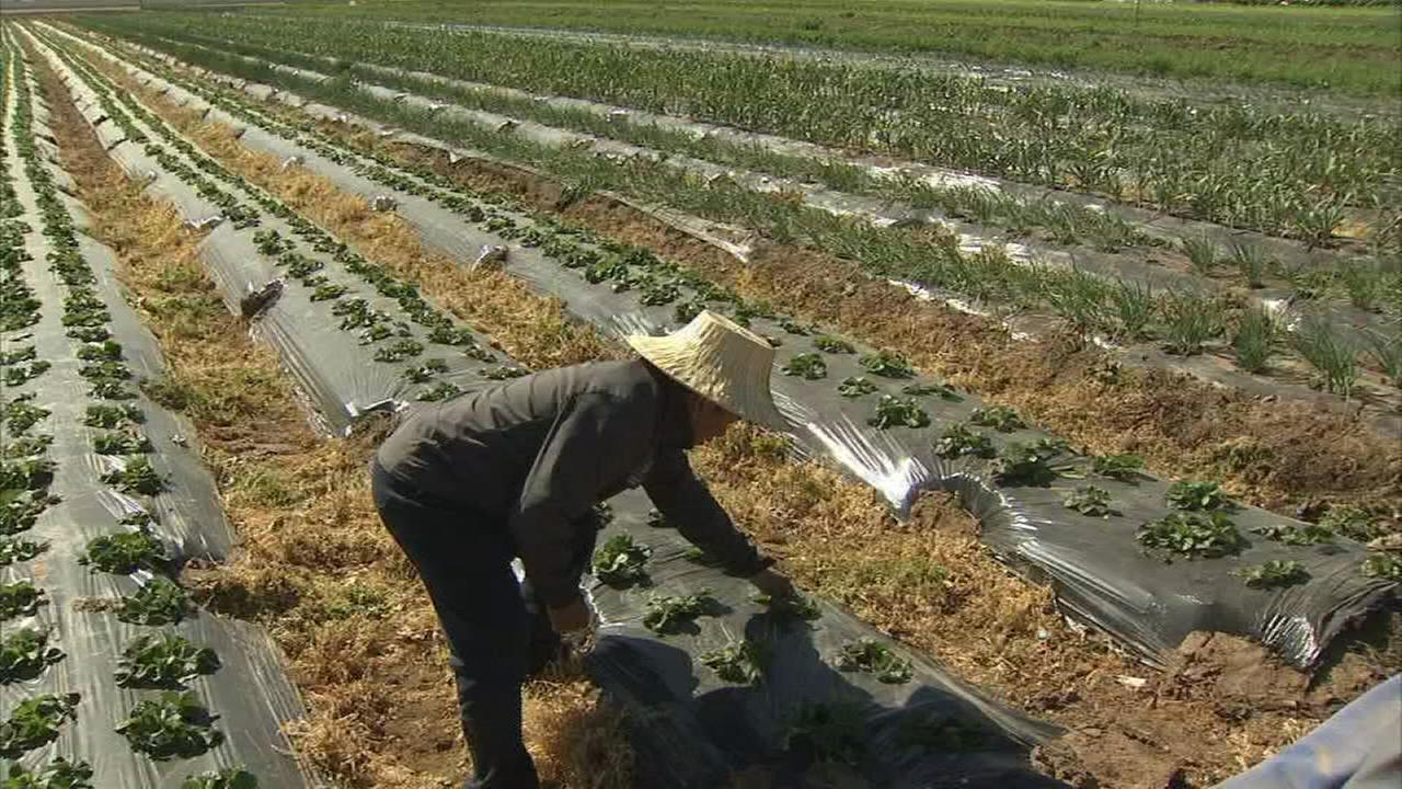 Temperatures dip into low 20s, freeze causing Ag damage
