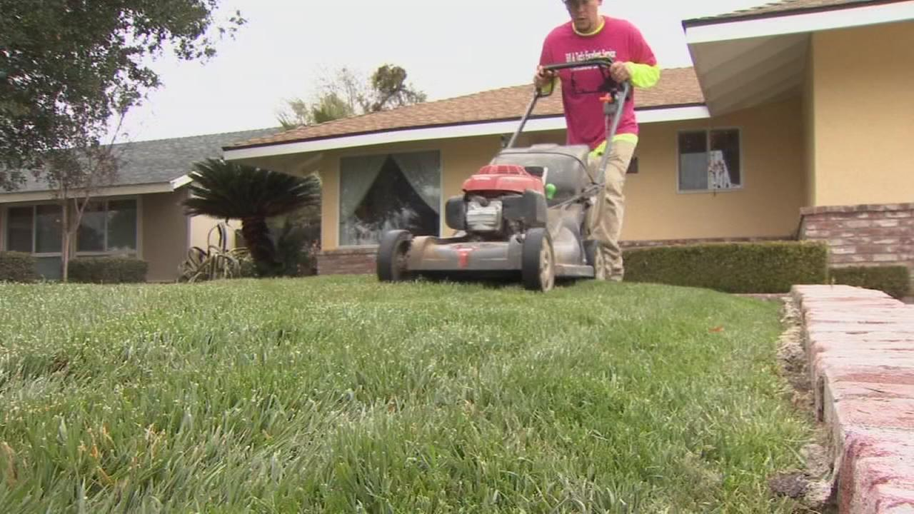 Finding a lawn care professional in the Valley just got a little easier thanks to a new app