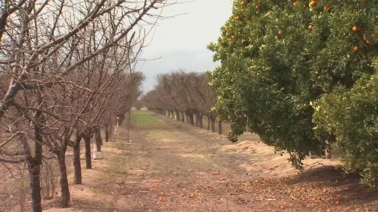 Valley farmers concerned about late season cold snap