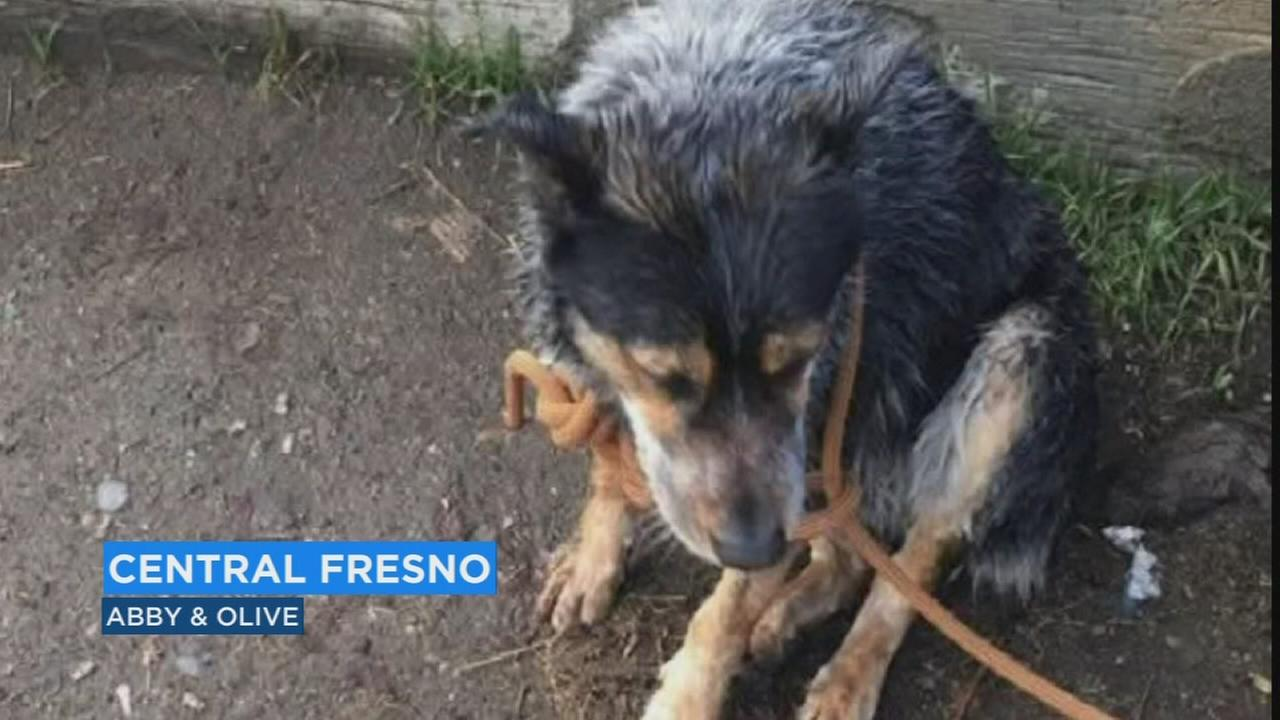 Officials looking for owner of dog rescued from canal in Fresno