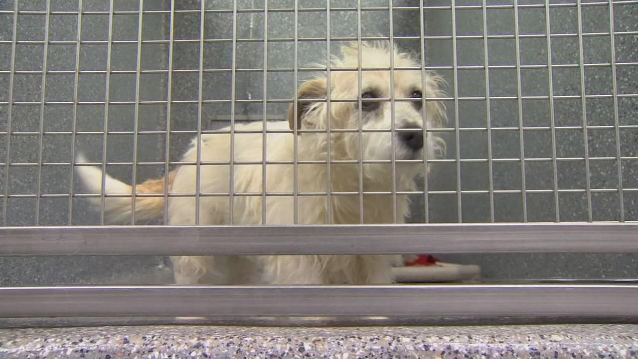 Local dog shelters and groomers taking precautions due to growing number of canine flu cases