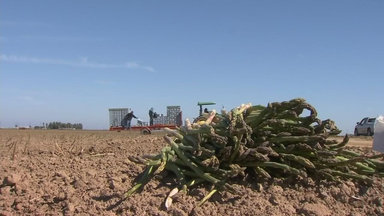 Farmers take a hit after recent statewide cold snap