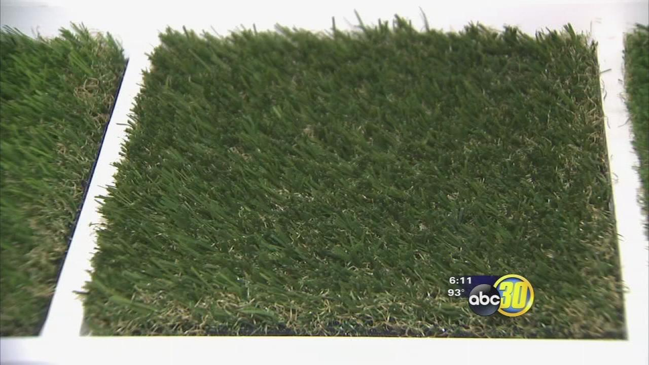 Waterless lawns considered the future of landscaping