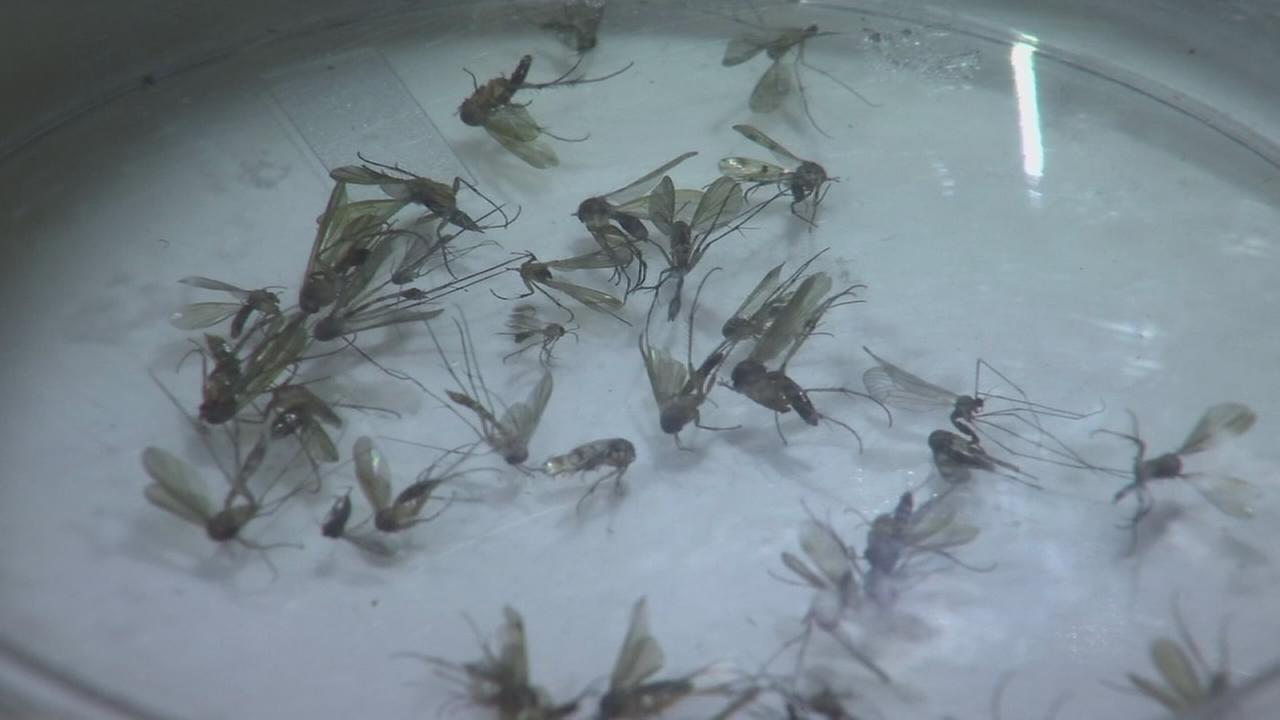 Efforts underway to stop mosquitos and the Zika virus