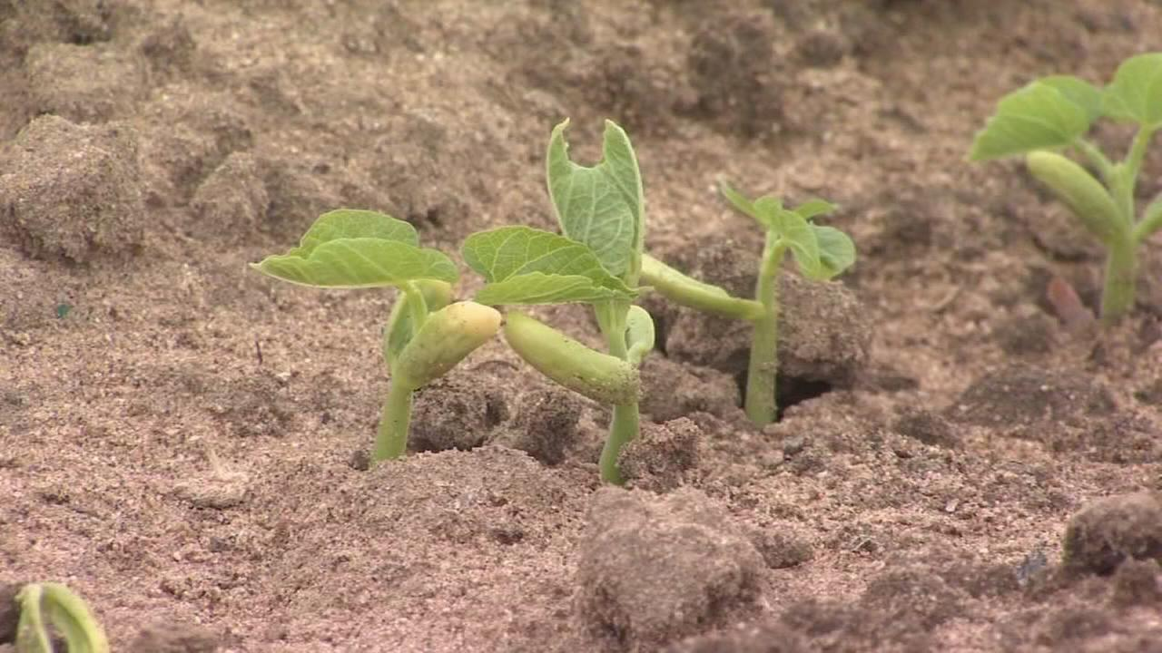 First day of spring brings challenge for Valley farmers
