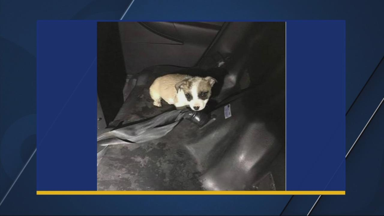 Man arrested for choking puppy by holding it under faucet of running water