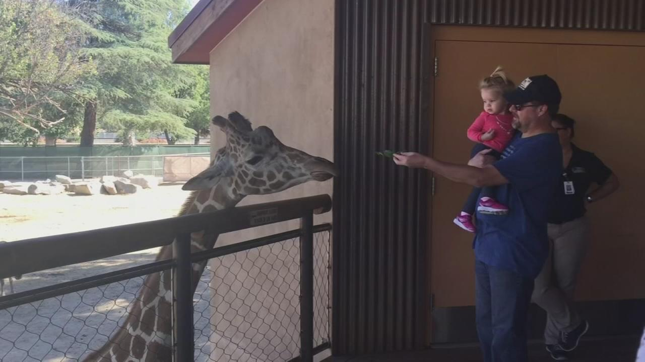 Chaffee Zoo giraffe has died