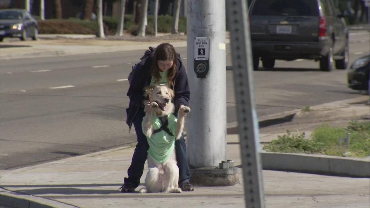 Valley Animal Center reaching the home stretch of their Pennies for Pups campaign
