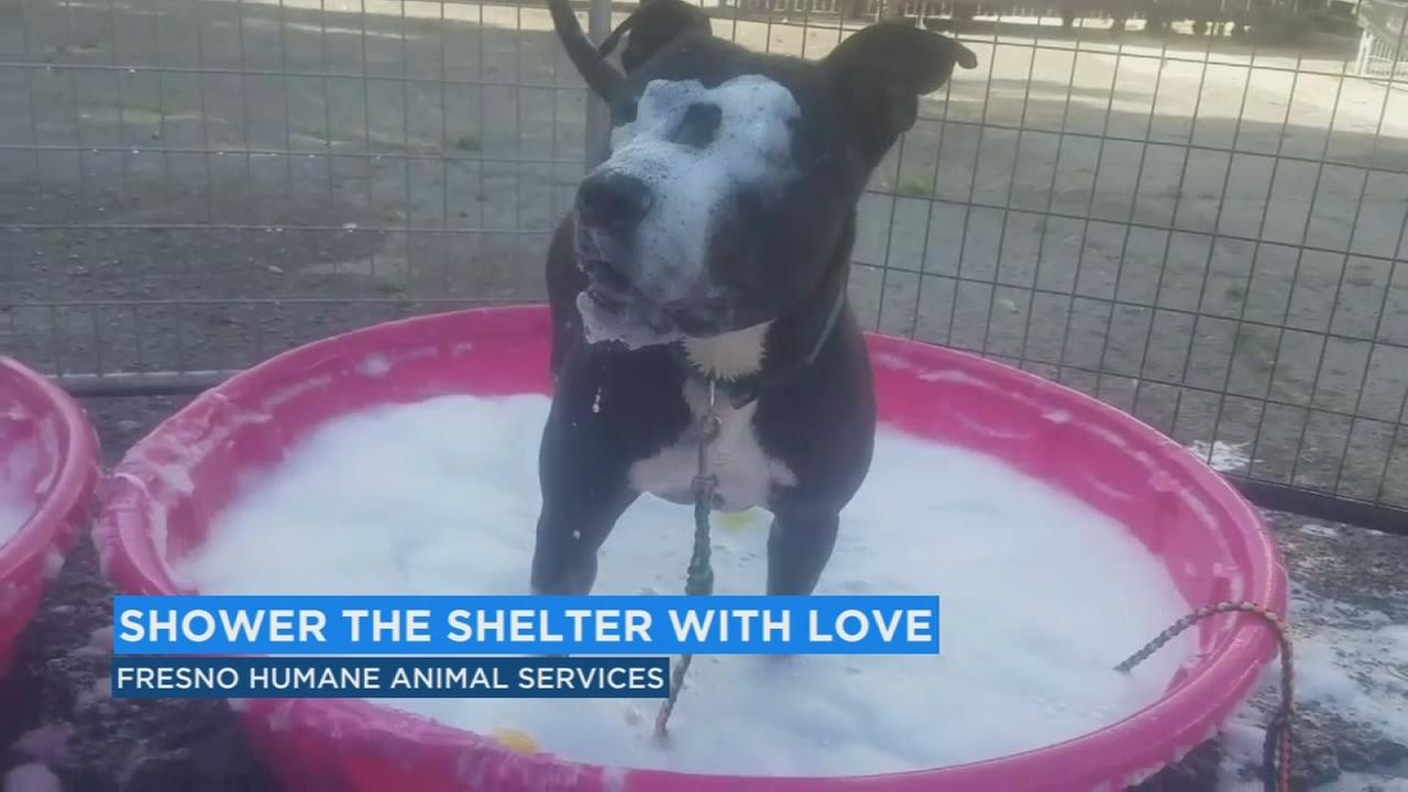 Fresno Humane celebrates warmer weather with rubber ducky themed adoption drive