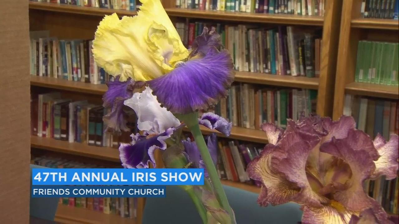 Fresnos Iris Society gearing up for annual showcase at Sierra Vista Mall