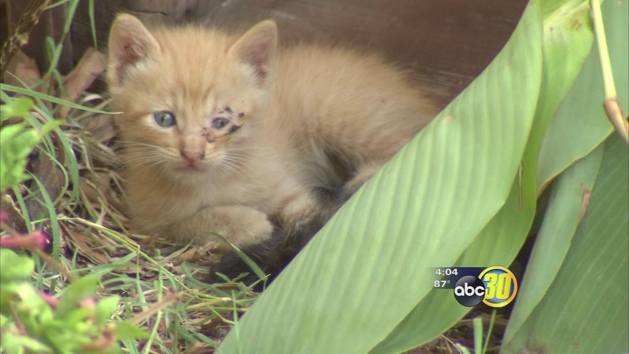 Nearly two dozen animals orphaned after fatal Fresno stabbing