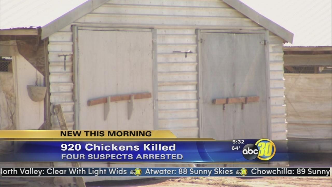4 teens arrested in Foster Farms chicken massacre