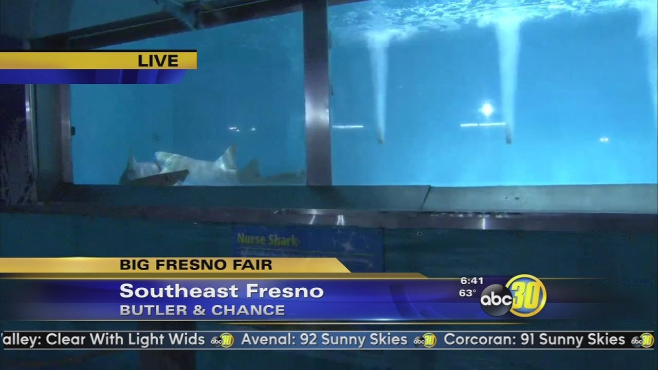 Big Fresno Fair - Live Shark Encounter