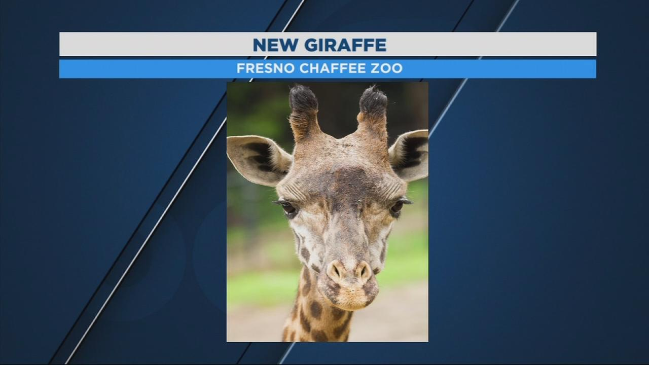 Fresno Chaffee Zoo welcoming new member