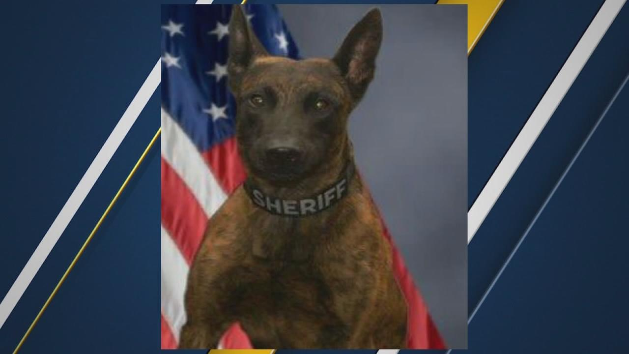 New bill looks to protect police dogs