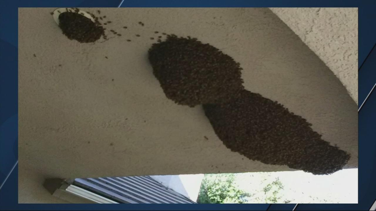 Thousands of bees removed from NE Fresno home