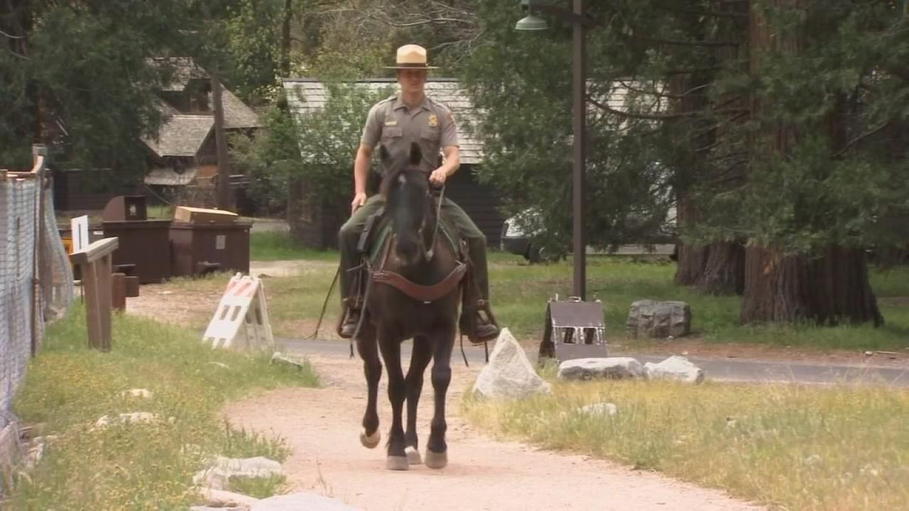 Inmate trained horses join Yosemite patrol team
