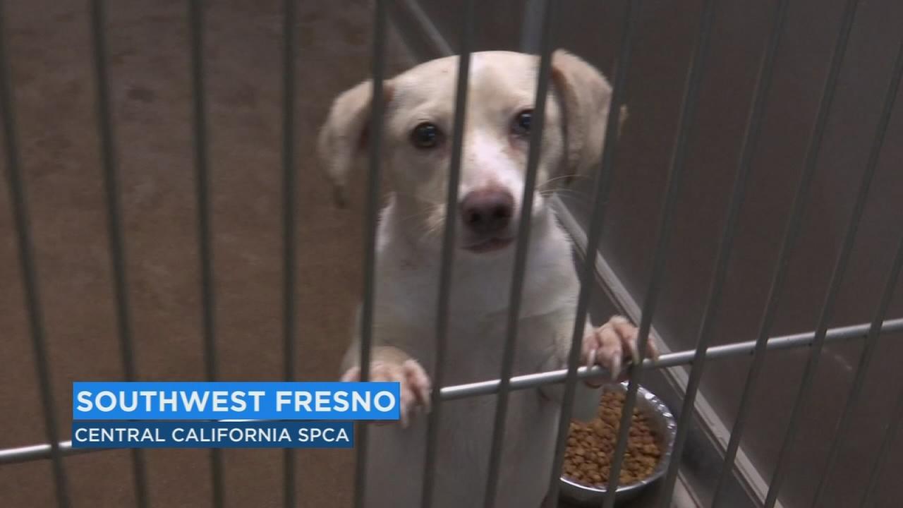 SPCA celebrates Cinco de Mayo by reducing adoption fees