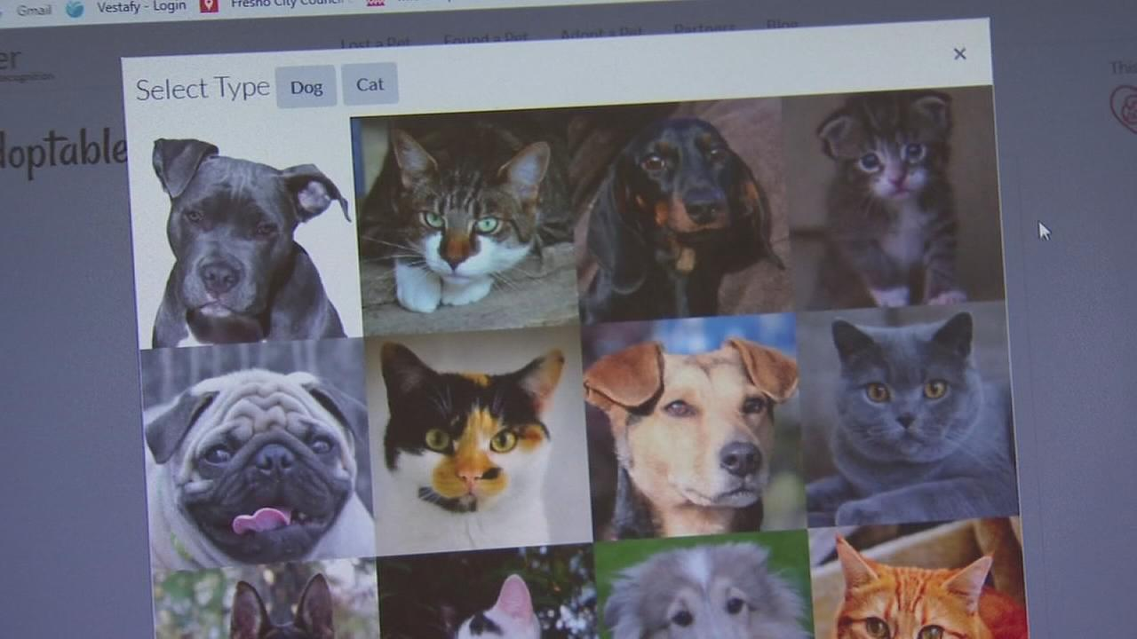 Facial recognition technology helping identify strays at CCSPCA