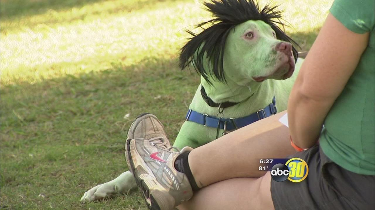 Dogs show off Halloween costumes at Bully BOO! Walk