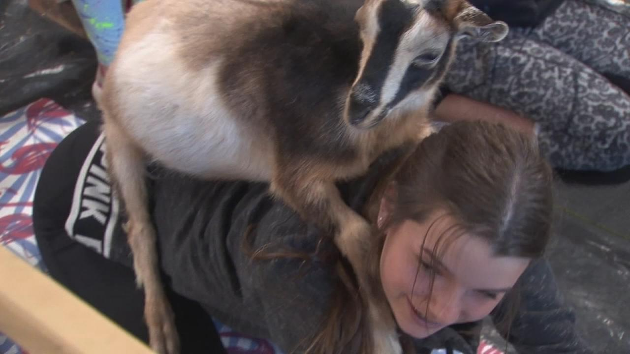 061318-kfsn-am-wow-goat-yoga-vid_1