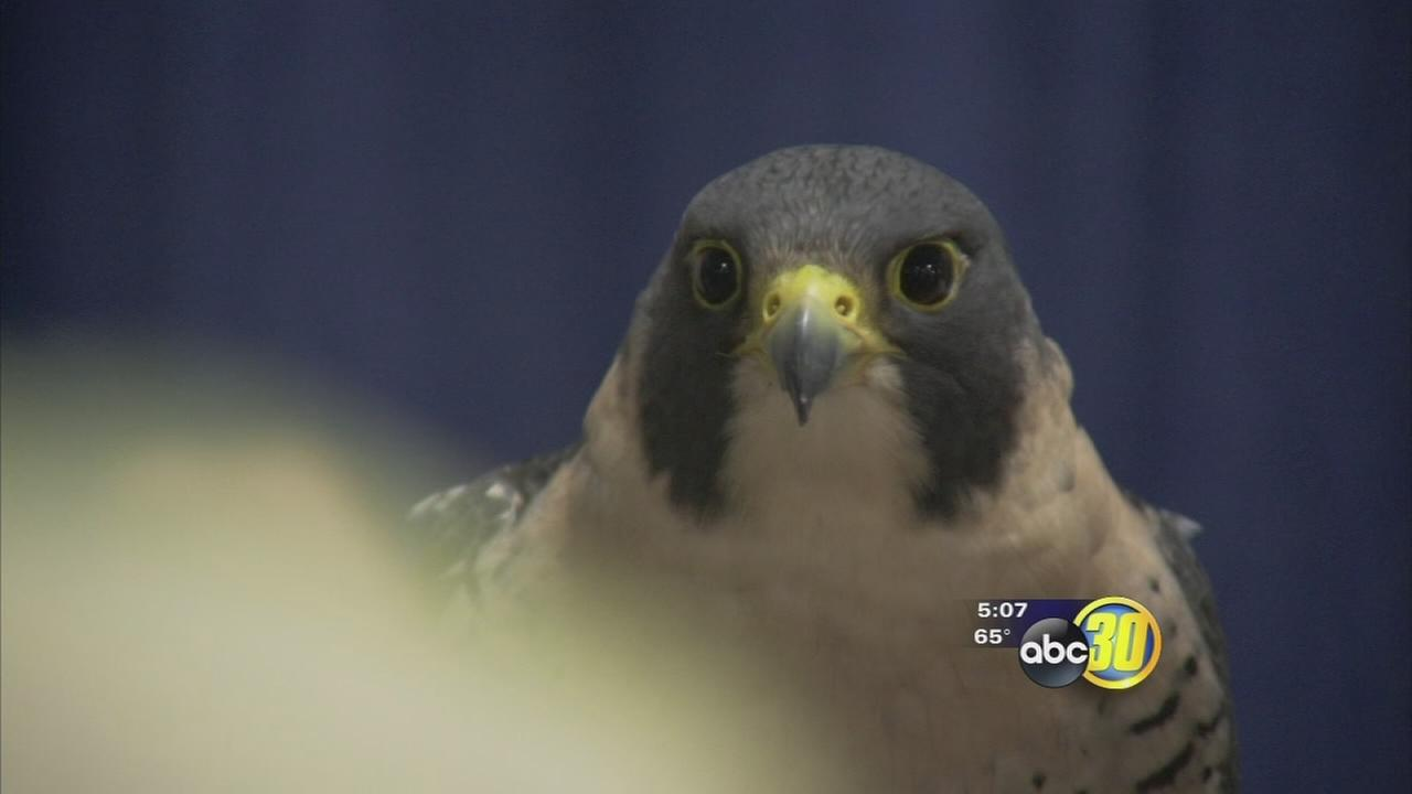 Ag show features birds of prey