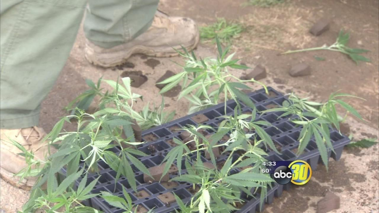 Fresno County house fire leads to discovery of marijuana plants