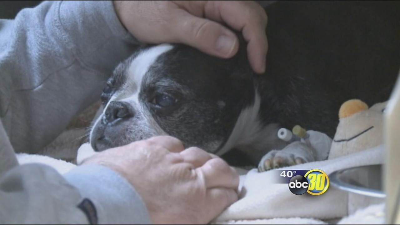 Dog survives 15-story fall with a big splash