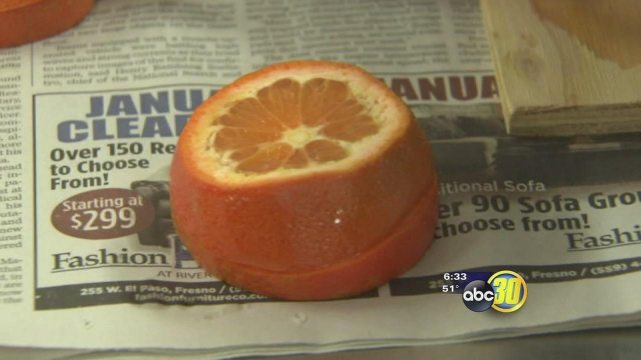 Valley citrus inspected for freeze damage