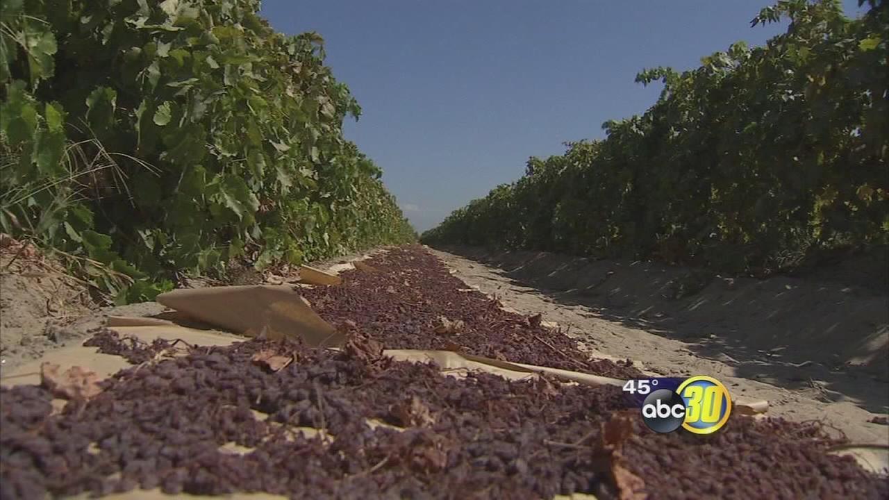 Supreme Court takes up dispute over California raisins