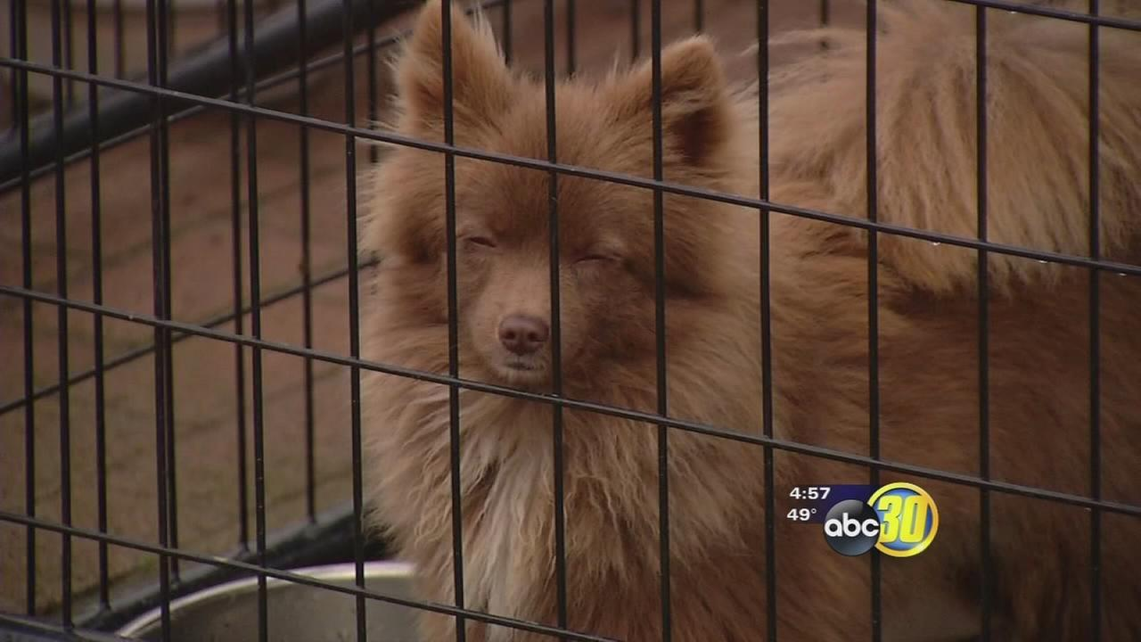 Valley Animal Haven in Lemoore opened their own facility this week