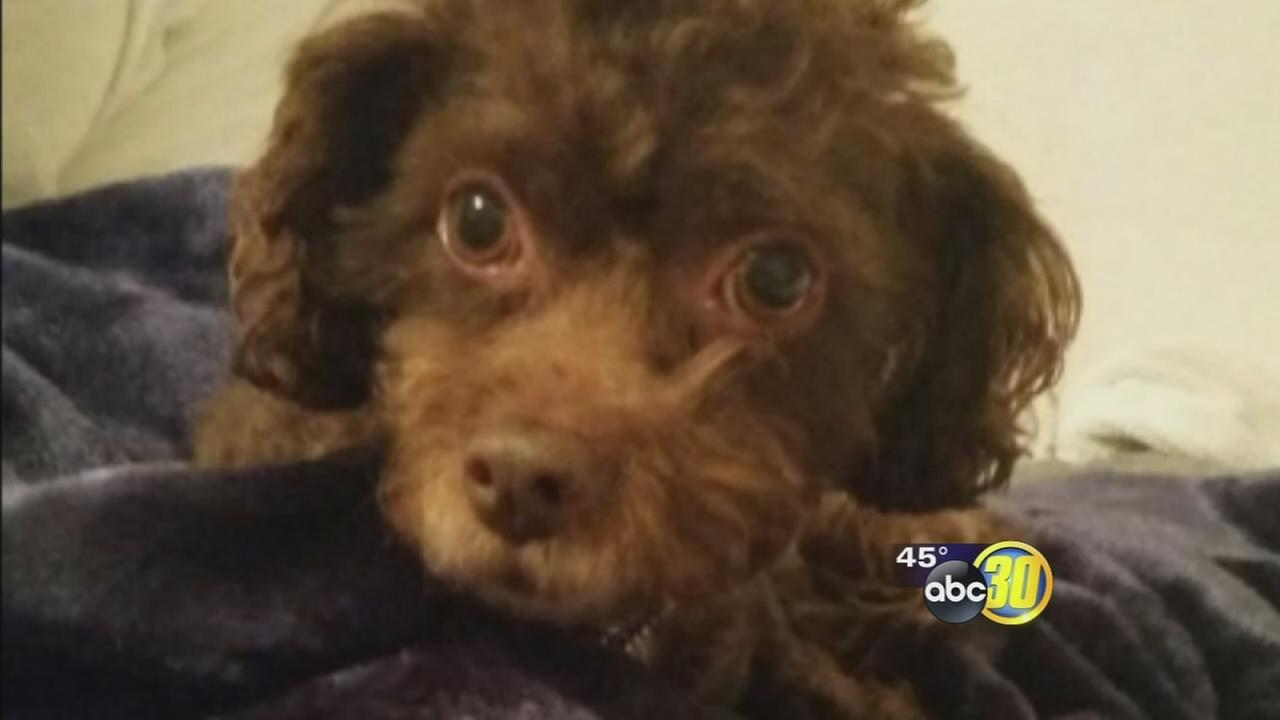Crooks use lost dog in effort to scam Fresno family