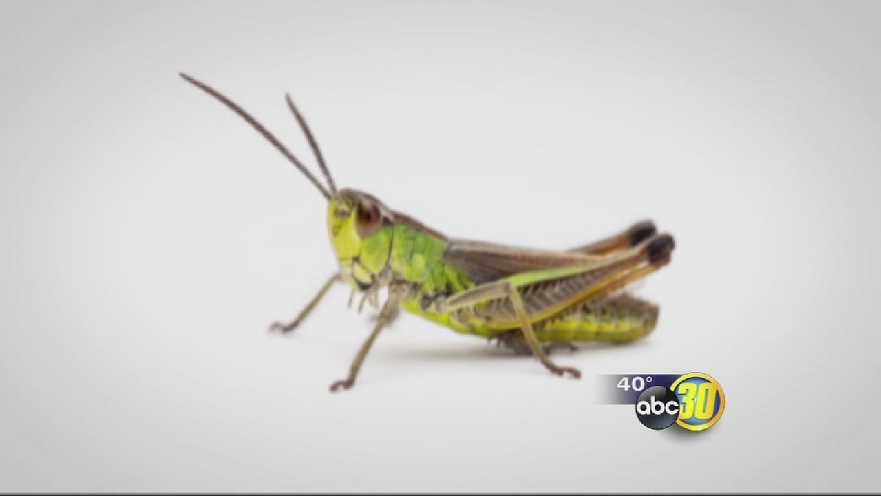 Latest food craze? Bugs!