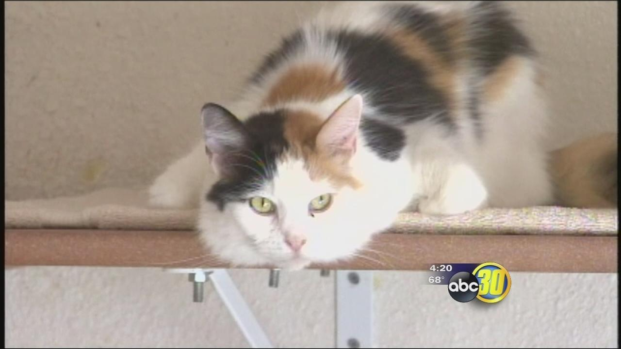Valley Animal Center offering low-cost spay, neutering for cats