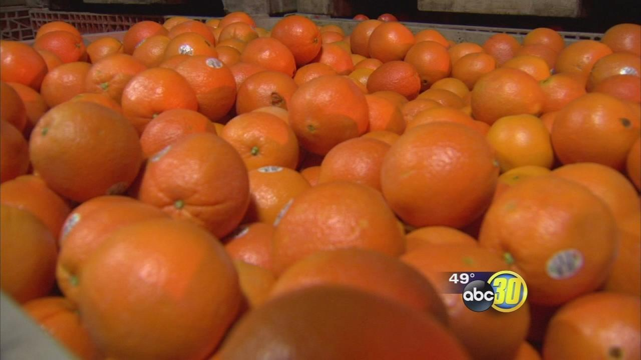 Valley citrus growers feeling some relief with ports reopening