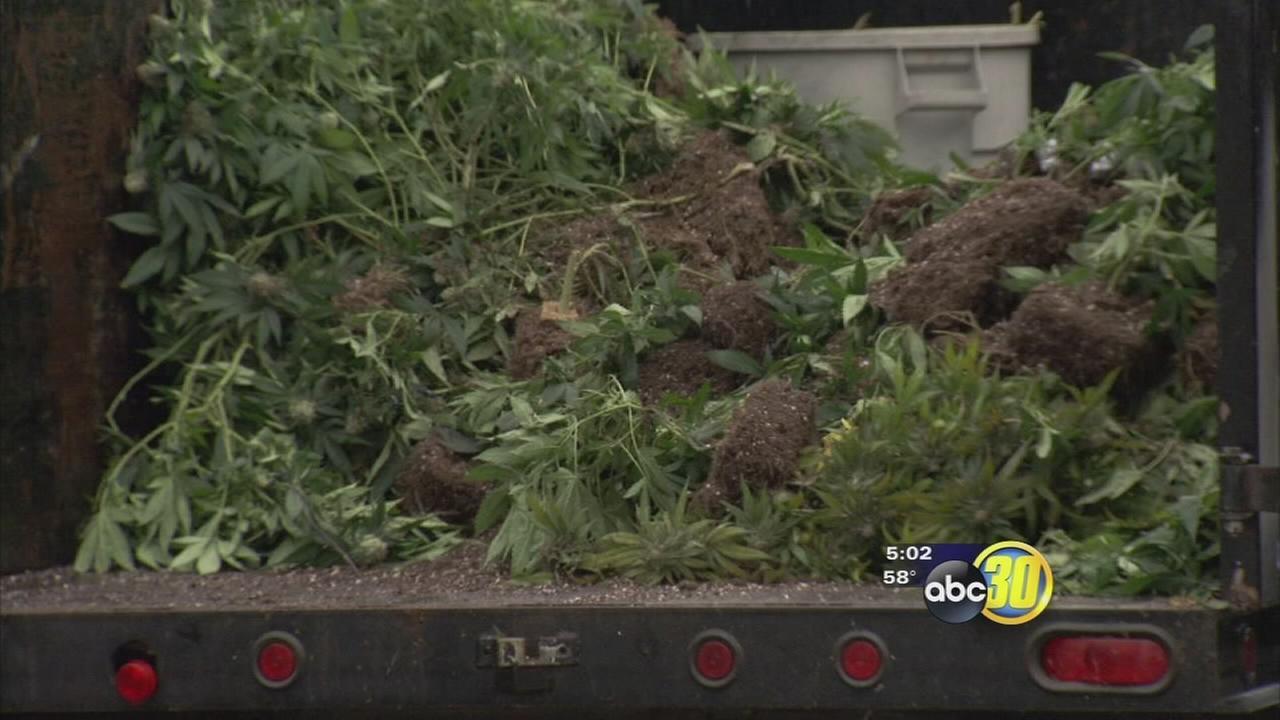 Federal agents bust marijuana house in Northeast Fresno