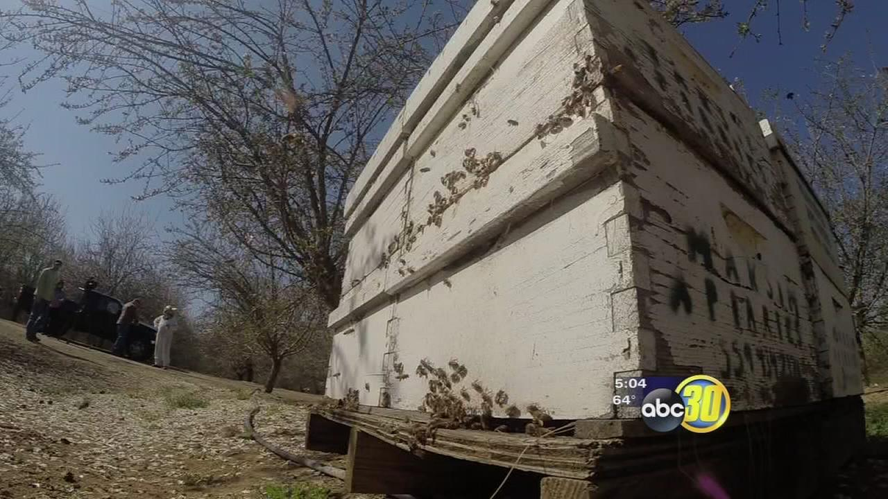 madera stolen beehives
