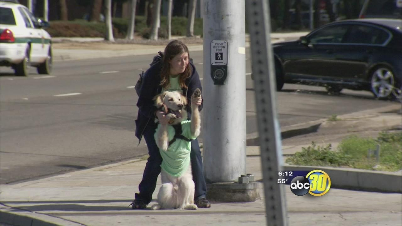 Valley Animal Center kicks off Pennies for Pets fundraiser in Fresno