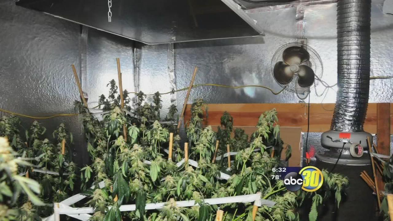 Marijuana grow found inside Central Fresno tire shop after fire