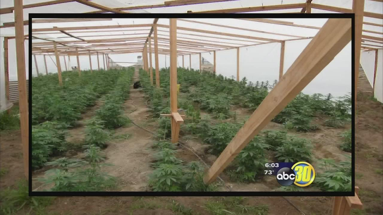 Property owners appeal Fresno County marijuana growing fines