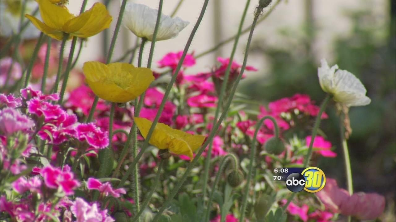 Valley breeze stirs up pollen, signals start of allergy season for many