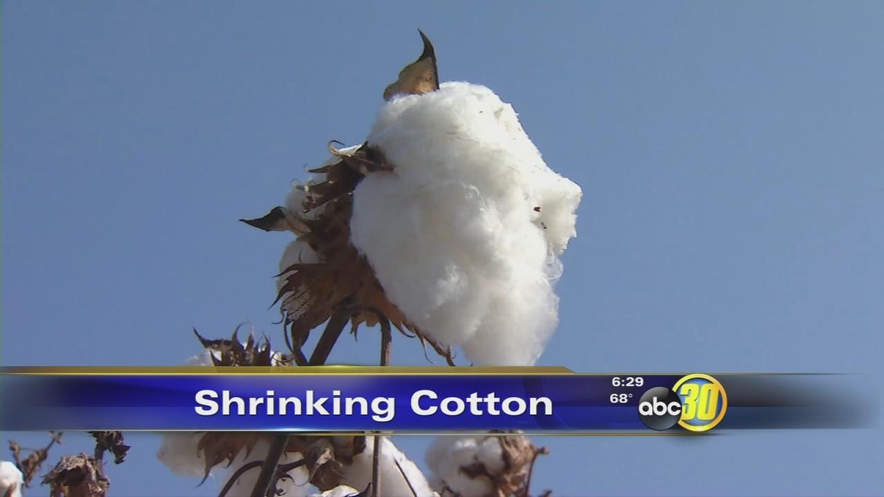 Drought, nut crops contribute to shrinking cotton production in the Valley