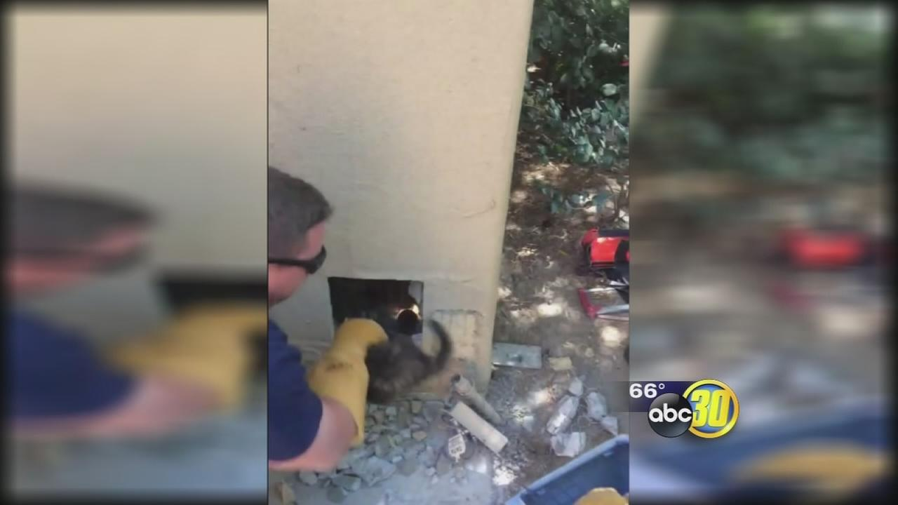 Firefighters rescue momma cat, kittens from wall of Clovis home